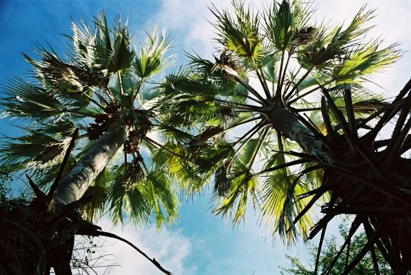 river-bed-makalani-tree2